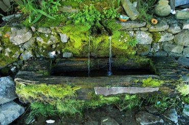 Voda- uslov za život